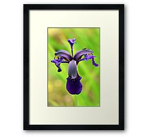 Iris - Ness Gardens, Ness, The Wirral Framed Print
