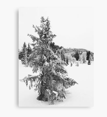 Black and White Shot of Snow-Covered Fir Tree in Frozen Winter Landscape Canvas Print