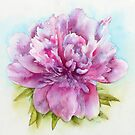 Pink Peony by Ray Shuell