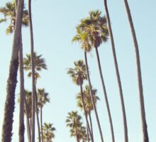 Santa Monica Palm Trees Sticker