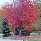 Days Of Autumn by kkphoto1