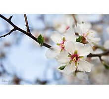 Almond flowers (IV) Photographic Print