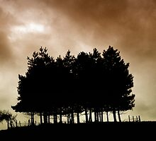 Pines in Silhouette  by Karen  Betts