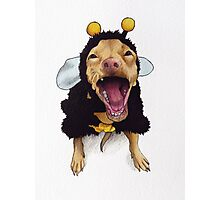 Tuna - bee costume Photographic Print