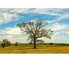 TREE FULL OF LIFE Photographic Print