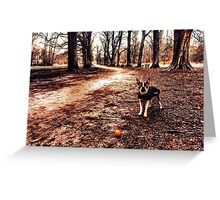 Portrait of a dog in winter Greeting Card
