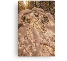 Backlighting sun shines behind snow covered branches Canvas Print