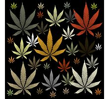 Marijuana Cannabis Weed Multicolored Black Background Photographic Print