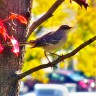 Mockingbird Enjoying The Autumn Day by James Brotherton