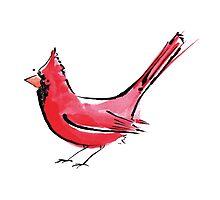 Cardinal Bird Photographic Print