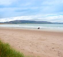 horse and rider at the maharees beach by morrbyte