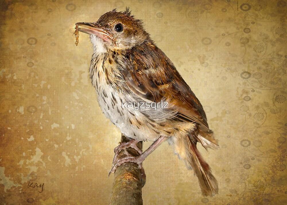 Fledgling Wren by kayzsqrlz