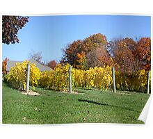 THE VINEYARD IN OCTOBER Poster