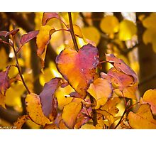 The Heart of Autumn Photographic Print