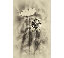 Dordogne Roadside Flower 2 Photographic Print