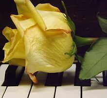 Melody Of A Rose   by lornakay