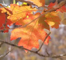 The Color Of Autumn  by lornakay