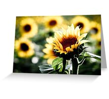 Sunflowers make me smile Greeting Card