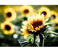 Sunflowers make me smile Photographic Print