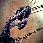 Bones by rentedochan