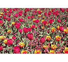 A Riot of Colour ! Photographic Print