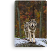 Double Trouble - Timber Wolves Canvas Print