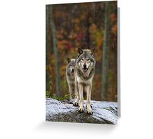 Double Trouble - Timber Wolves Greeting Card