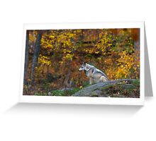 Lone Wolf - Timber Wolf Greeting Card