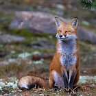 Fox Zen - Algonquin Park, Canada by Jim Cumming