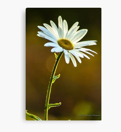 Big White Daisy Canvas Print