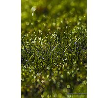 Morning Dew in the Grass (2) Photographic Print