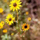 Yellow Flowers by AllanDavisJr