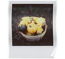 the gourd harvest Poster