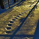 Walk Near Midnight by Eileen McVey