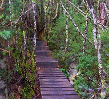 Climbing to Crater Lake on the Overland Track Tasmania. by Nicholas Griffin