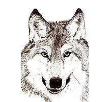 Wolf Stare by nonny