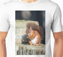 Red Squirrel on Wall Unisex T-Shirt