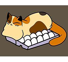 Calico Sleeping in Egg Carton Photographic Print