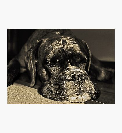 I see you...........  -Boxer Dogs Series- Photographic Print