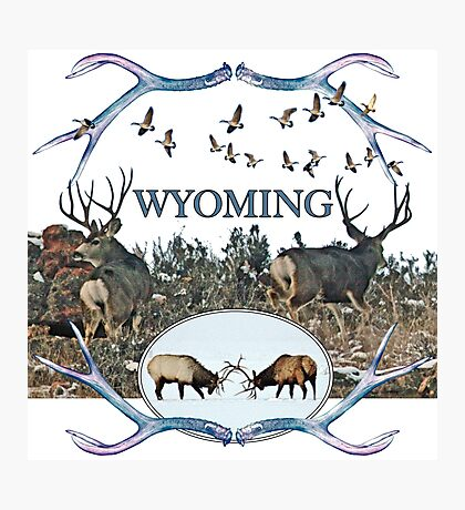 Wyoming wildlife  Photographic Print