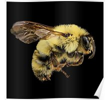 Bees Are Cute Poster