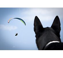 When Dogs Fly Photographic Print