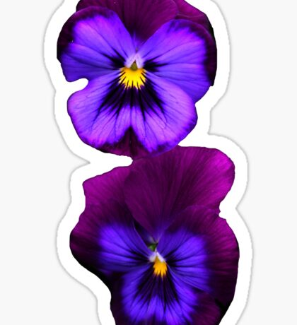 Purple Pansy Sticker  Sticker