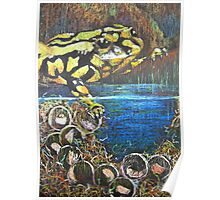 Australian  Corroboree Frog from a Pastel Painting  Poster
