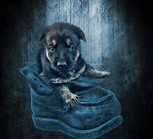 ADORABLE GERMAN SHEPHERD PUPPY IN BOOT PICTURE,PILLOW,TOTE BAG, by ✿✿ Bonita ✿✿ ђєℓℓσ