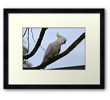 cockatoo had to be in the act Framed Print