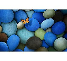Stones and butterfly Photographic Print