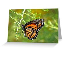 Monarch Butterfly ~ Mosiac Wings Greeting Card