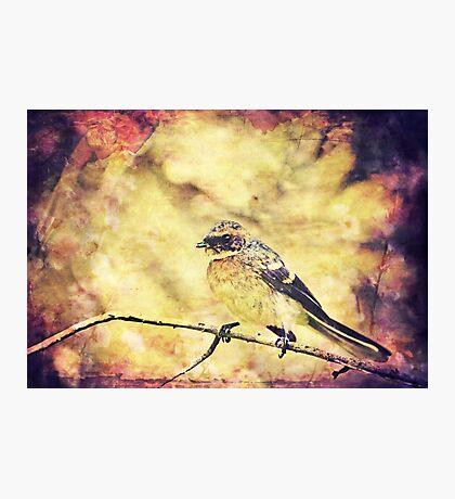 Antique Songbird Photographic Print