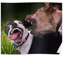 Dogs with game face on .9 Poster